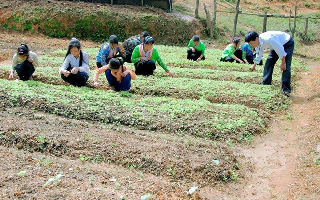 Học sinh Phổ thông dân tộc bán trú - THCS Sa Dung (xã Sa Dung, huyện Điện Biên Đông, tỉnh Điện Biên) đang làm vườn.