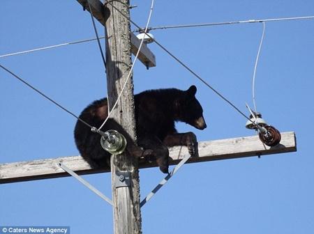 Chú gấu đen tỉnh giấc
