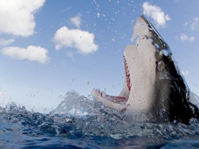 Chồng đấm vào mặt cá mập 3 lần vì tội cắn nát chân vợ