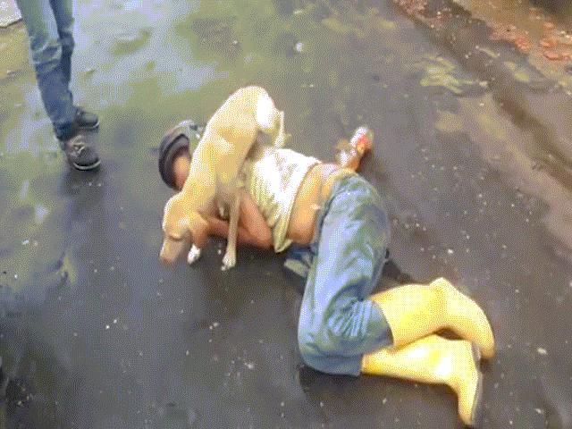 Chủ say xỉn nằm giữa đường, chó kiên quyết không cho ai động vào