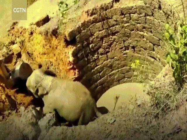 Cả làng giải cứu chú voi bị rơi xuống giếng nước