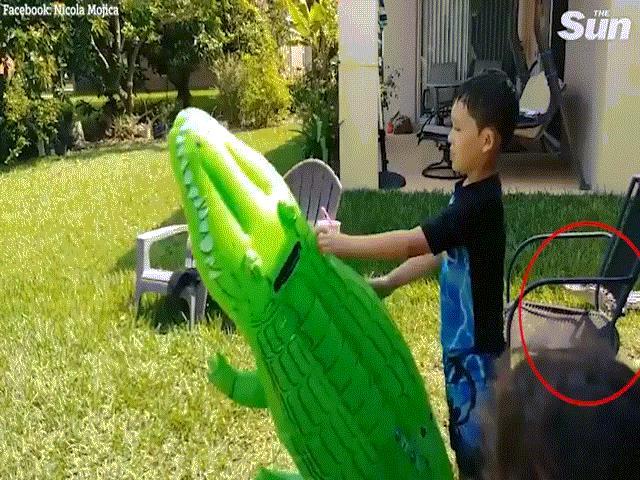Đang chơi với phao hình cá sấu, không ngờ cá sấu thật ngay cạnh