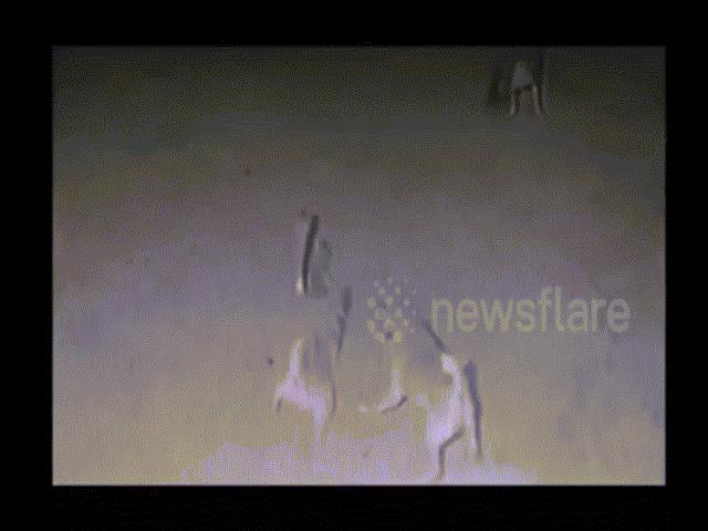 Video: Đàn chó tử chiến hổ mang chúa hung hãn và kết cục đau lòng