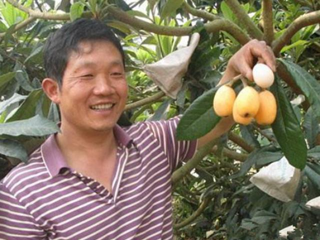 Trồng nhót tây, loại quả lạ lẫm với người Việt, thu hơn nửa tỷ đồng mỗi năm