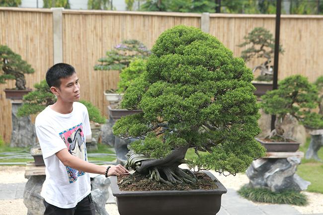 choang ngop vuon bonsai nhat tien ty giua dat bac giang hinh anh 1
