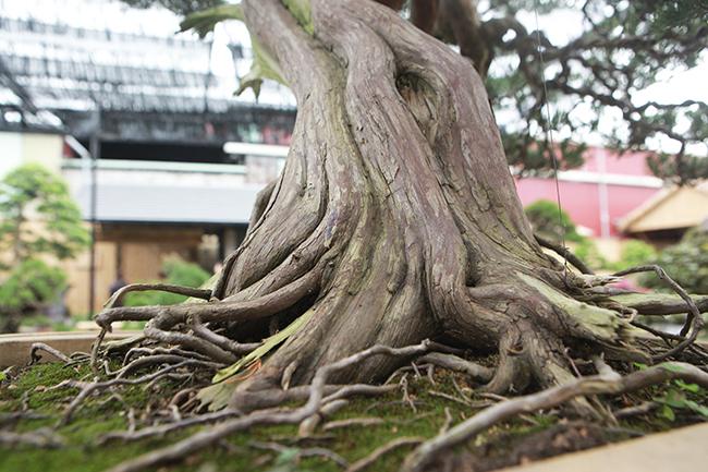choang ngop vuon bonsai nhat tien ty giua dat bac giang hinh anh 12