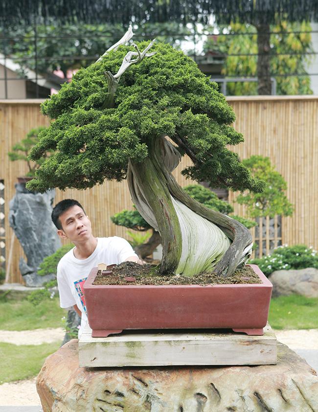 choang ngop vuon bonsai nhat tien ty giua dat bac giang hinh anh 15