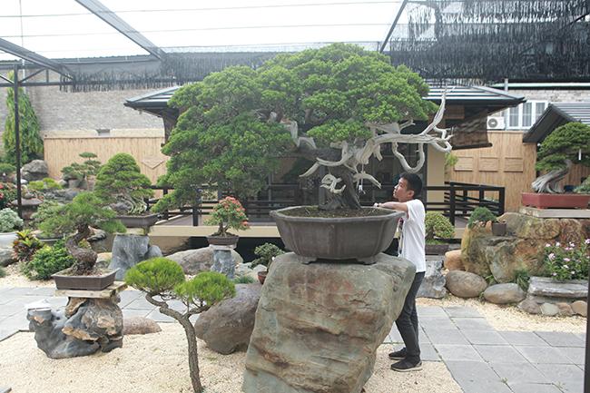 choang ngop vuon bonsai nhat tien ty giua dat bac giang hinh anh 4