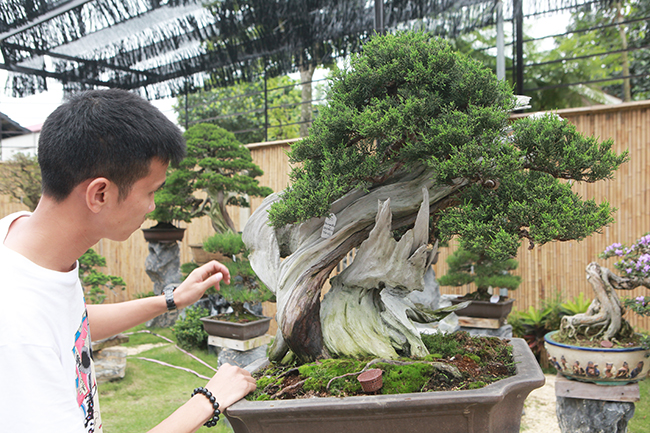 choang ngop vuon bonsai nhat tien ty giua dat bac giang hinh anh 8