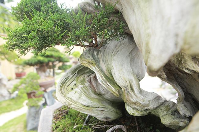 choang ngop vuon bonsai nhat tien ty giua dat bac giang hinh anh 9