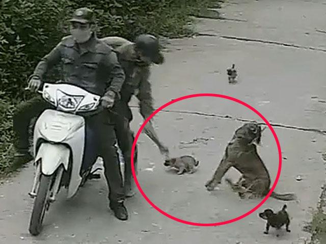 bảo vệ chó