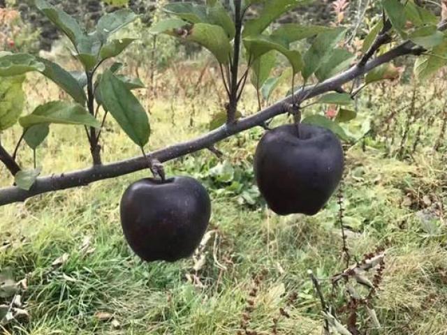 Lạ lùng những loài thực vật đắt đỏ mang tên… đá quý, có cả ở Việt Nam
