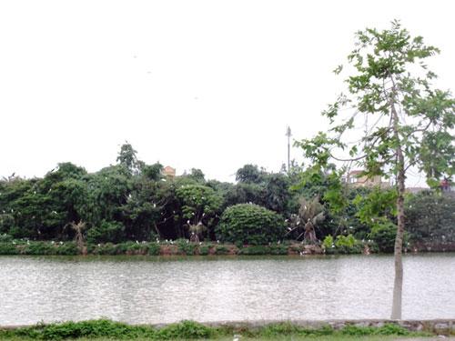 Độc đáo đảo cò giữa lòng thành phố Hưng Yên 2