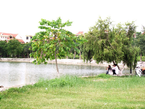 Độc đáo đảo cò giữa lòng thành phố Hưng Yên 3