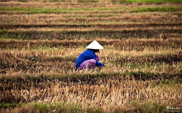 Đồng đất Việt Nam qua ống kính nhiếp ảnh gia người Pháp 4