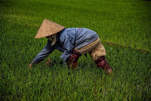 Đồng đất Việt Nam qua ống kính nhiếp ảnh gia người Pháp 5