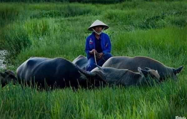 Đồng đất Việt Nam qua ống kính nhiếp ảnh gia người Pháp 14