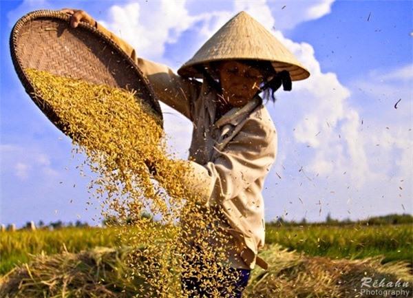 Đồng đất Việt Nam qua ống kính nhiếp ảnh gia người Pháp 15