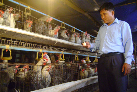 Ông Đào Xuân Hải (thôn Đồng Tâm, xã Kim Long, Tam Dương, Vĩnh Phúc) khẳng định chưa bao giờ dùng kháng sinh cấm trong nuôi gà.