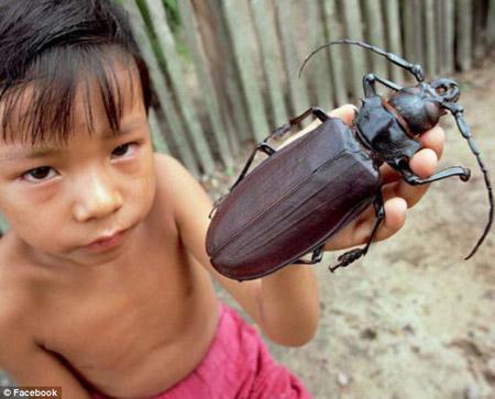Loài bọ cánh cứng Titanus giganteus bí ẩn.