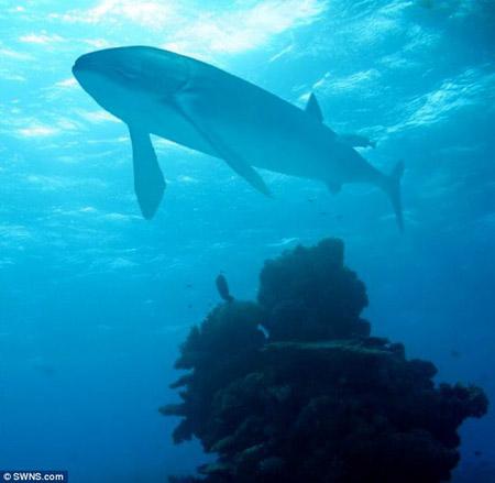 Hình ảnh con cá khổng lồ - Cá Leedsichthys. Ảnh: HNGN.