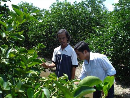 Ông Vũ Ngọc Báo (phải) bên vườn chanh  không hạt cho thu cả tỷ đồng/năm