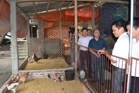 Chủ tịch Nguyễn Quốc Cường (áo đen) thăm một hộ sản xuất giỏi.
