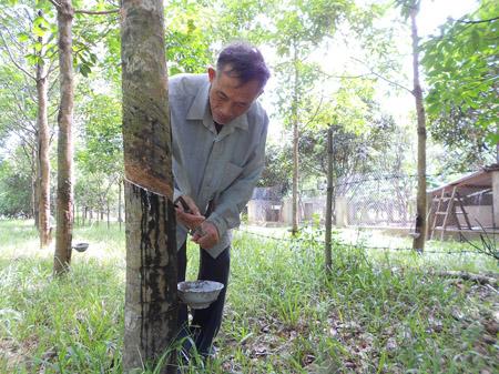 Mô hình trang trại VACR của ông Lê Kha cho  thu nhập hàng trăm triệu đồng mỗi năm.