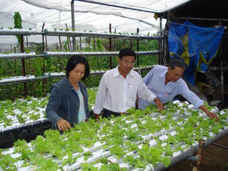 Chị Hoa đang giới thiệu hệ thống trồng  rau thủy canh.
