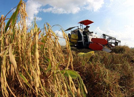 Theo GS Bửu, nhiều giống lúa ở ĐBSCL có thể cho gạo tốt để xây dựng thương hiệu gạo Việt Nam trên thế giới.