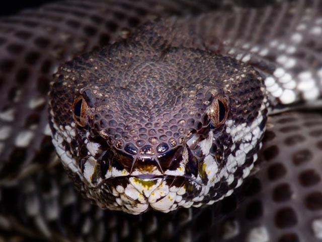 """Hòn đảo """"kinh dị"""" là nhà của hơn 20.000 con rắn độc"""