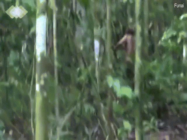 Video về người sống sót duy nhất của bộ lạc Amazon bị sát hại