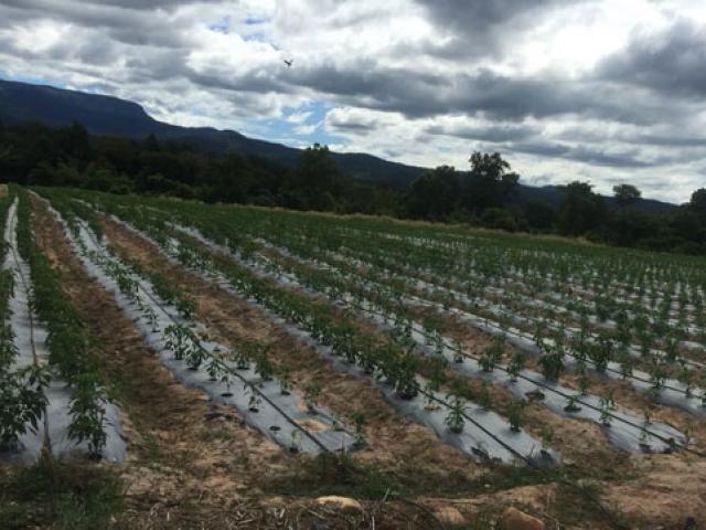 Thảm họa vỡ đập tại Lào: Bầu Đức thiệt hại bao nhiêu?