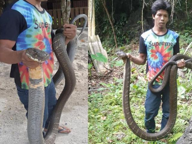 """Bắt được hổ mang chúa dài 5m ở Thái Lan, dân kính cẩn gọi là """"ông"""""""