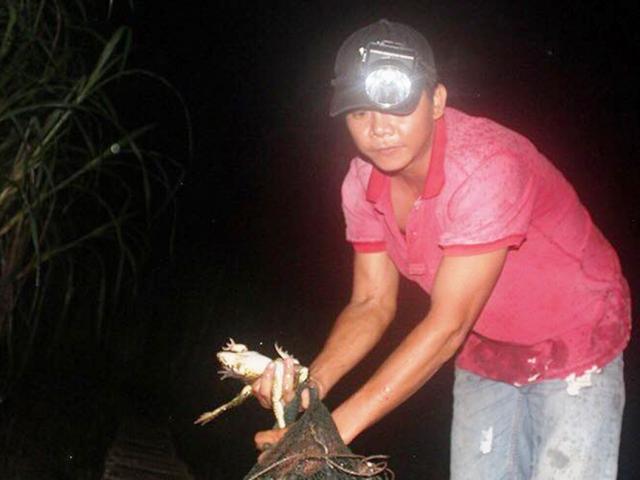Trắng đêm săn ếch đát, thấy nhiều cũng không dám bắt thêm
