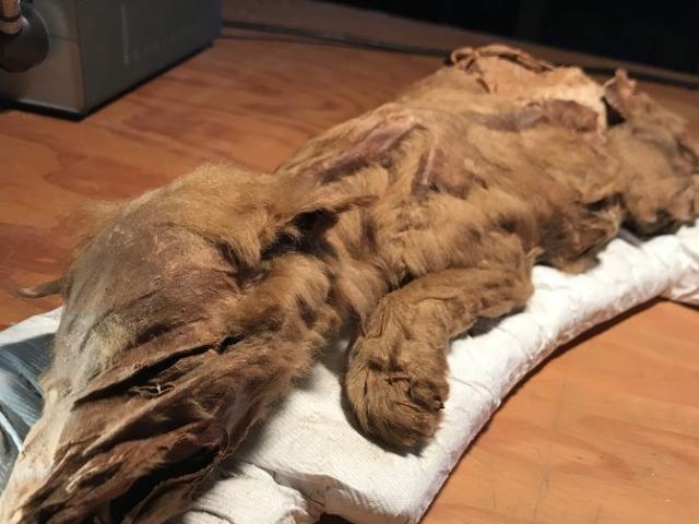 Kinh ngạc 2 xác ướp đóng băng 5 vạn năm vẫn còn nguyên vẹn ở Canada