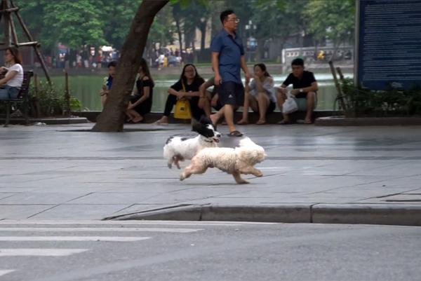 Nhiều chú cún cưng không được xích và đeo rọ mõm, tự do chạy nhảy.