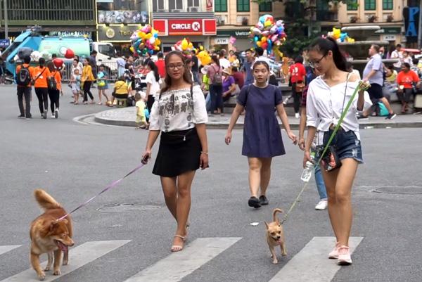 Do chưa có chế tài xử phạt, nên người dân không đeo rọ mõm chó thường chỉ bị bảo vệ nhắc nhở.