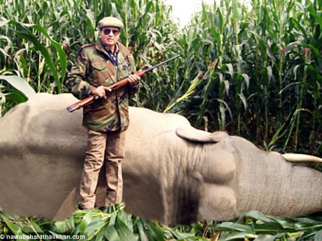 Thợ săn hàng đầu Ấn Độ nhận lệnh giết hổ cái hại chết 13 người