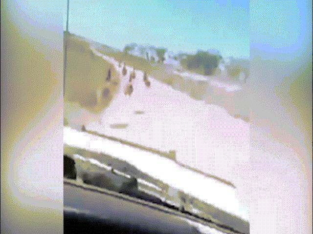 Nam thanh niên lái xe tốc độ cao, đâm chết hàng loạt chim khổng lồ
