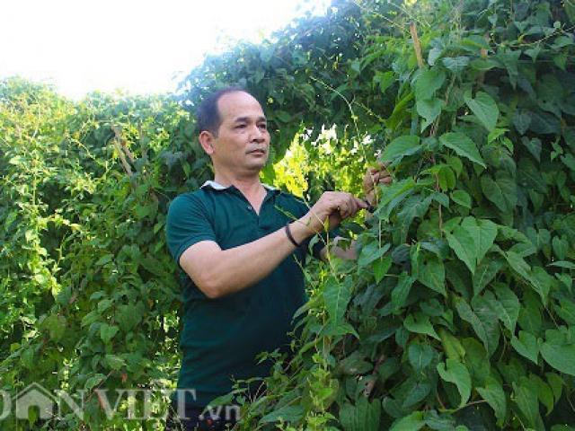 """Gia Lai: Vườn dược liệu 10 tỷ đồng """"khổng lồ"""" ở vùng tiêu chết"""
