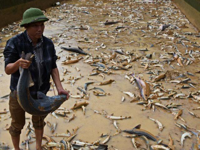 """Thất thần: Lũ quét sạch trại """"cá tàu ngầm"""", đại gia Lâm Đồng trắng tay"""