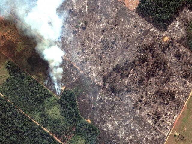Những sự thật về cháy rừng Amazon