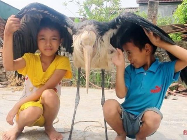 Thông tin mới nhất về chú chim lạ khổng lồ, cực hiếm ở Hà Tĩnh