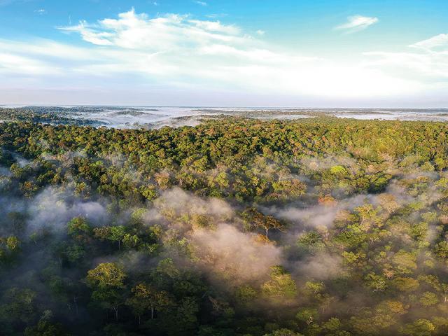 """Rừng Amazon không phải là """"lá phổi xanh"""" của thế giới?"""