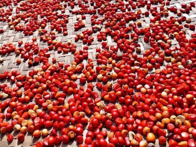 """Từ loại hạt phổ biến ở Việt Nam có thể xin thoải mái, nay có giá bán """"đắt như vàng"""""""