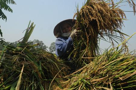Thời gian qua, nông dân một số địa phương gặp khó khăn, mất mát do thiên tai, nhất là tại các tỉnh miền Trung.
