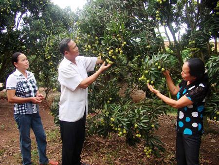 Phân bón đa yếu tố NPK Văn Điển giúp điều chỉnh độ pH thích hợp cho cây phát triển.