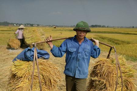 Lo đầu ra ổn định cho nông sản và đảm bảo đời sống nông dân là vấn đề nhiều đại biểu Quốc hội rất quan tâm.