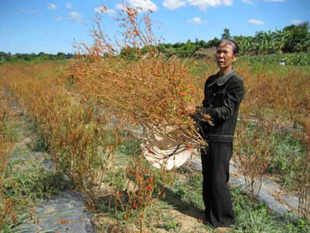 Người dân thị xã An Khê thiệt hại nặng bởi thủy điện xả lũ.